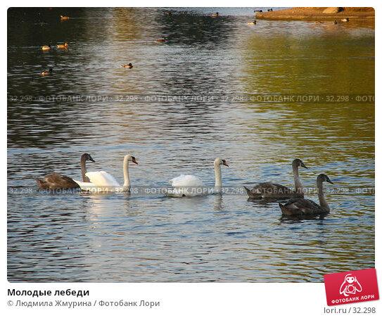 Молодые лебеди, фото № 32298, снято 10 октября 2005 г. (c) Людмила Жмурина / Фотобанк Лори