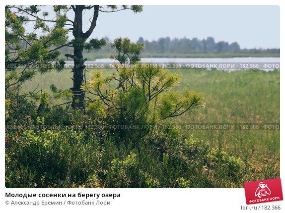 Молодые сосенки на берегу озера, фото № 182366, снято 6 июля 2007 г. (c) Александр Ерёмин / Фотобанк Лори