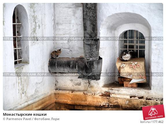 Монастырские кошки, фото № 177462, снято 2 января 2008 г. (c) Parmenov Pavel / Фотобанк Лори
