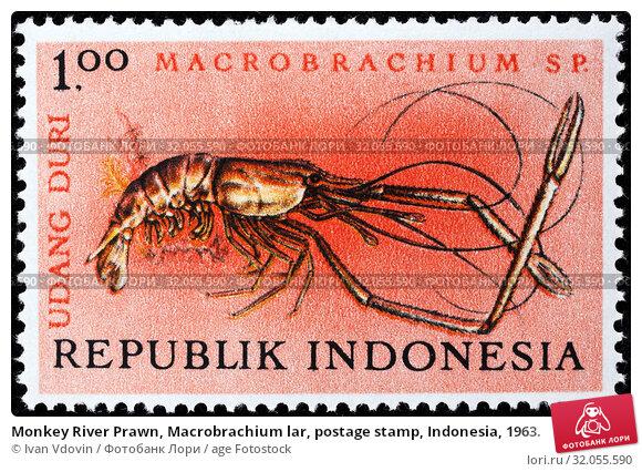 Monkey River Prawn, Macrobrachium lar, postage stamp, Indonesia, 1963. (2013 год). Редакционное фото, фотограф Ivan Vdovin / age Fotostock / Фотобанк Лори