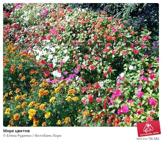 Море цветов, фото № 56582, снято 6 сентября 2006 г. (c) Елена Руденко / Фотобанк Лори