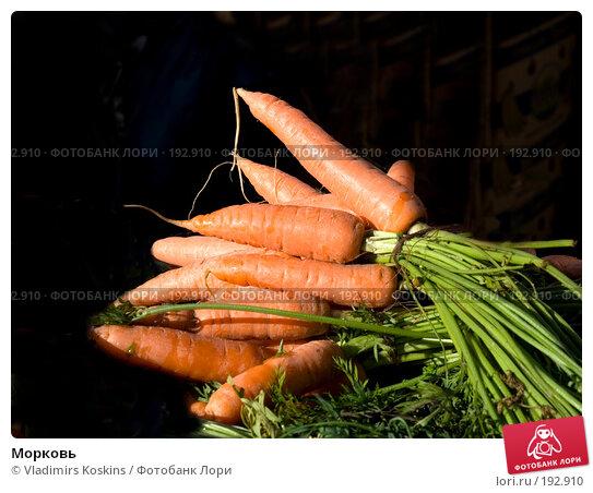 Морковь, фото № 192910, снято 14 октября 2007 г. (c) Vladimirs Koskins / Фотобанк Лори