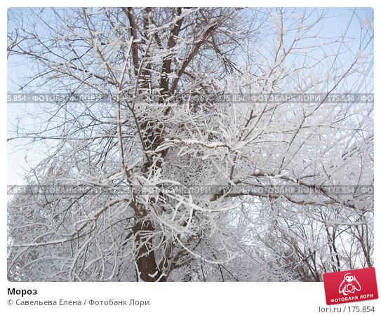 Мороз, фото № 175854, снято 10 января 2008 г. (c) Cавельева Елена / Фотобанк Лори
