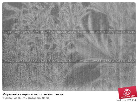 Морозные сады - изморозь на стекле, фото № 167814, снято 6 января 2008 г. (c) Антон Алябьев / Фотобанк Лори