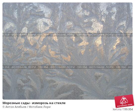 Морозные сады - изморозь на стекле, фото № 199954, снято 3 января 2008 г. (c) Антон Алябьев / Фотобанк Лори