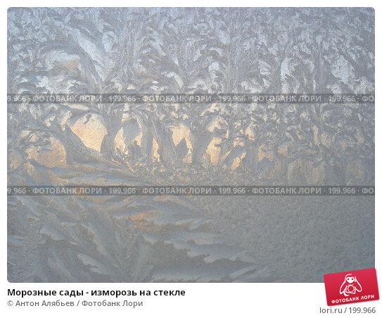 Морозные сады - изморозь на стекле, фото № 199966, снято 3 января 2008 г. (c) Антон Алябьев / Фотобанк Лори
