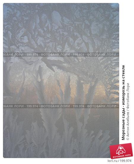 Морозные сады - изморозь на стекле, фото № 199974, снято 3 января 2008 г. (c) Антон Алябьев / Фотобанк Лори