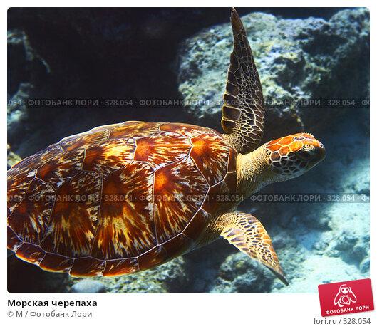 Купить «Морская черепаха», фото № 328054, снято 20 ноября 2017 г. (c) Михаил / Фотобанк Лори
