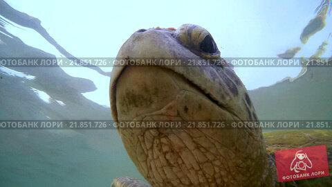 Купить «Морская черепаха крупным планом в море», видеоролик № 21851726, снято 29 января 2016 г. (c) Некрасов Андрей / Фотобанк Лори