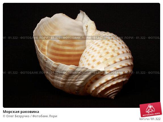 Морская раковина, фото № 81322, снято 5 сентября 2007 г. (c) Олег Безручко / Фотобанк Лори