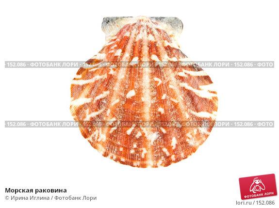 Морская раковина, фото № 152086, снято 17 декабря 2007 г. (c) Ирина Иглина / Фотобанк Лори