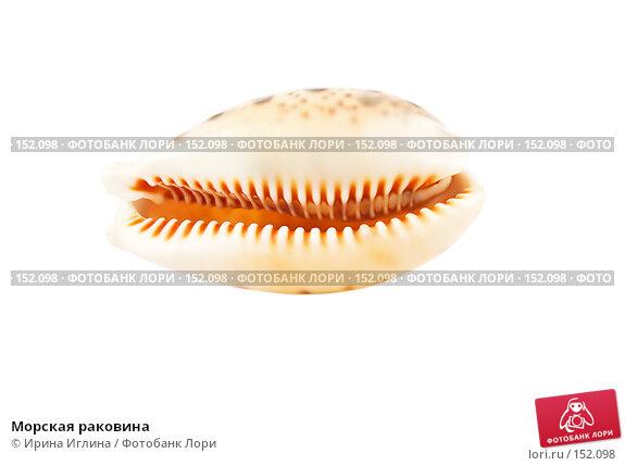 Купить «Морская раковина», фото № 152098, снято 17 декабря 2007 г. (c) Ирина Иглина / Фотобанк Лори