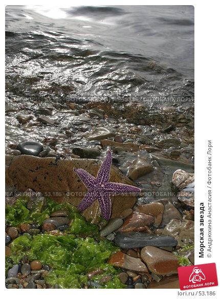 Морская звезда, фото № 53186, снято 16 сентября 2005 г. (c) Андрюхина Анастасия / Фотобанк Лори