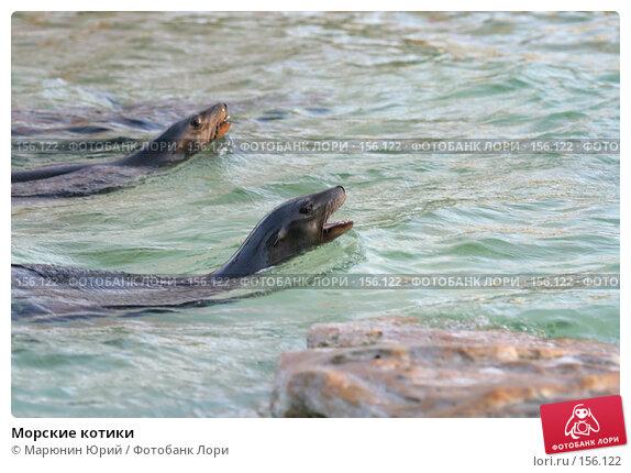 Купить «Морские котики», фото № 156122, снято 10 декабря 2007 г. (c) Марюнин Юрий / Фотобанк Лори