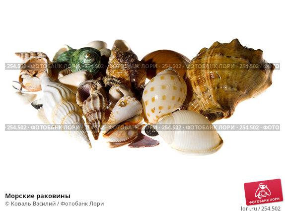 Морские раковины, фото № 254502, снято 3 февраля 2008 г. (c) Коваль Василий / Фотобанк Лори