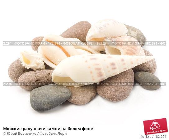Морские ракушки и камни на белом фоне, фото № 182294, снято 20 января 2008 г. (c) Юрий Борисенко / Фотобанк Лори