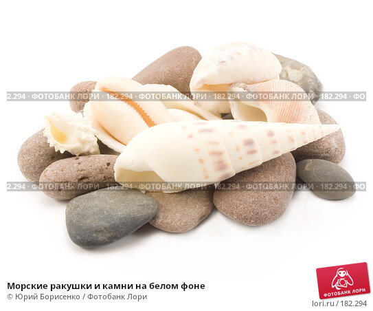 Купить «Морские ракушки и камни на белом фоне», фото № 182294, снято 20 января 2008 г. (c) Юрий Борисенко / Фотобанк Лори