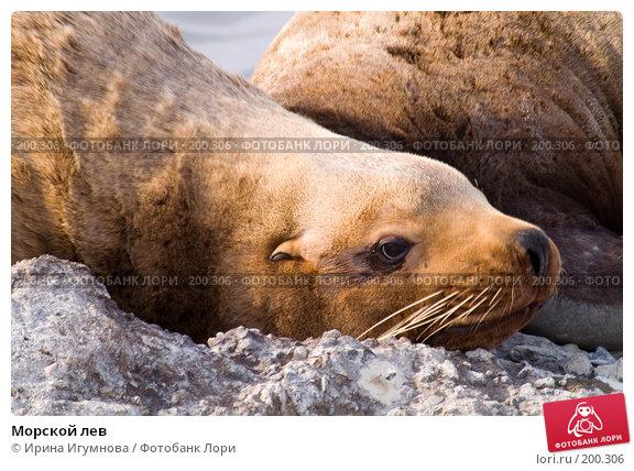 Купить «Морской лев», фото № 200306, снято 18 апреля 2007 г. (c) Ирина Игумнова / Фотобанк Лори