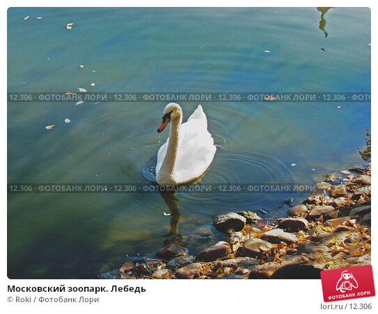 Московский зоопарк. Лебедь, фото № 12306, снято 24 сентября 2006 г. (c) Roki / Фотобанк Лори