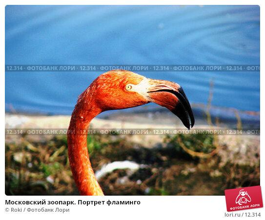 Московский зоопарк. Портрет фламинго, фото № 12314, снято 24 сентября 2006 г. (c) Roki / Фотобанк Лори
