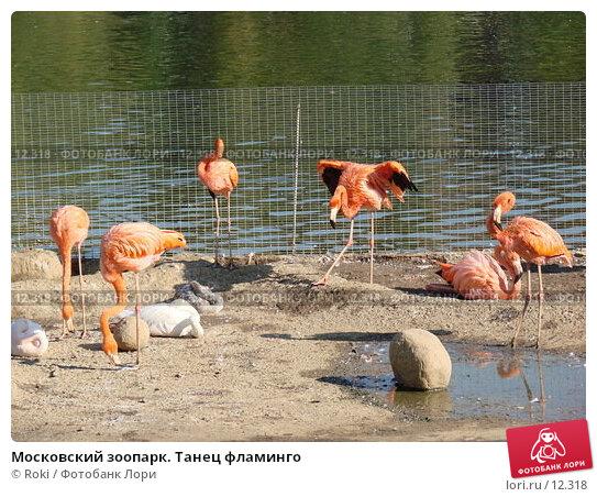 Московский зоопарк. Танец фламинго, фото № 12318, снято 24 сентября 2006 г. (c) Roki / Фотобанк Лори