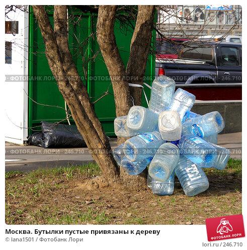 Москва. Бутылки пустые привязаны к дереву, эксклюзивное фото № 246710, снято 7 апреля 2008 г. (c) lana1501 / Фотобанк Лори