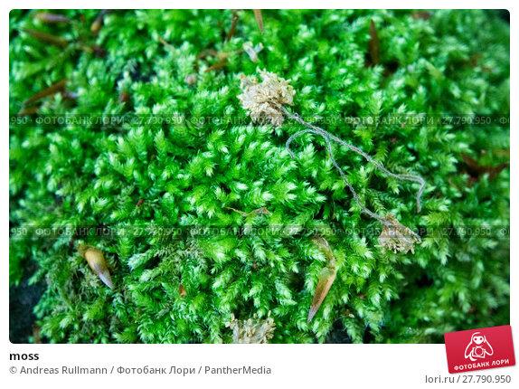 Купить «moss», фото № 27790950, снято 18 октября 2018 г. (c) PantherMedia / Фотобанк Лори