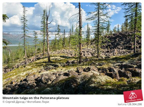 Купить «Mountain taiga on the Putorana plateau», фото № 28304298, снято 3 августа 2015 г. (c) Сергей Дрозд / Фотобанк Лори