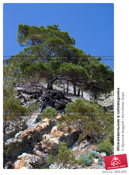 Можжевельник в заповеднике, фото № 303410, снято 18 мая 2008 г. (c) Фролов Андрей / Фотобанк Лори
