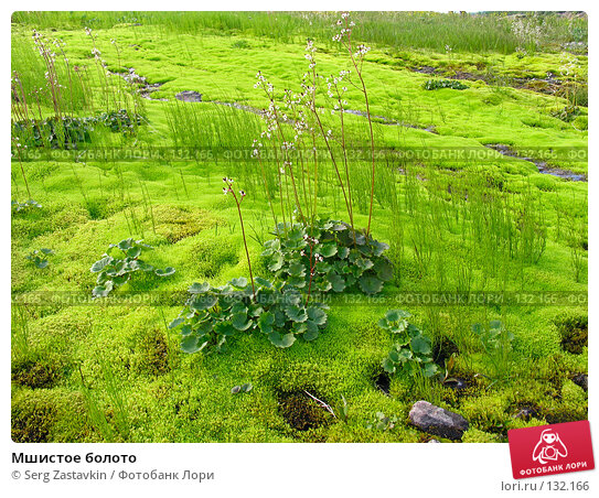 Мшистое болото, фото № 132166, снято 26 июля 2004 г. (c) Serg Zastavkin / Фотобанк Лори