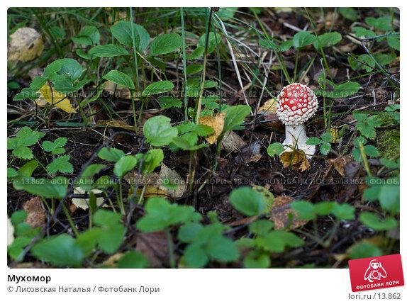 Мухомор, фото № 13862, снято 9 сентября 2006 г. (c) Лисовская Наталья / Фотобанк Лори