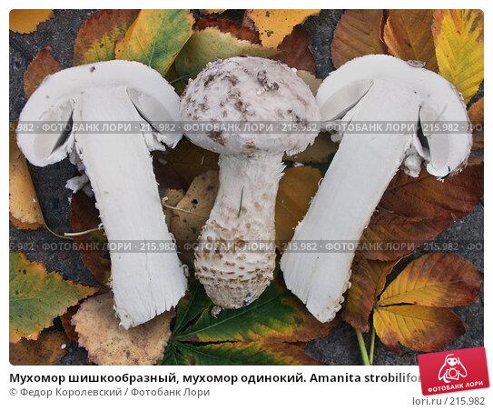 Мухомор шишкообразный, мухомор одинокий. Amanita strobiliformis, фото № 215982, снято 27 октября 2002 г. (c) Федор Королевский / Фотобанк Лори