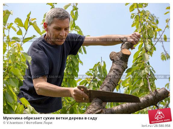 Купить «Мужчина обрезает сухие ветки дерева в саду», фото № 28580958, снято 10 июня 2018 г. (c) V.Ivantsov / Фотобанк Лори