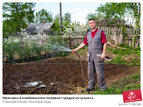 Мужчина в комбинезоне поливает грядки из шланга, фото № 7184306, снято 1 июня 2013 г. (c) Евгений Ткачёв / Фотобанк Лори