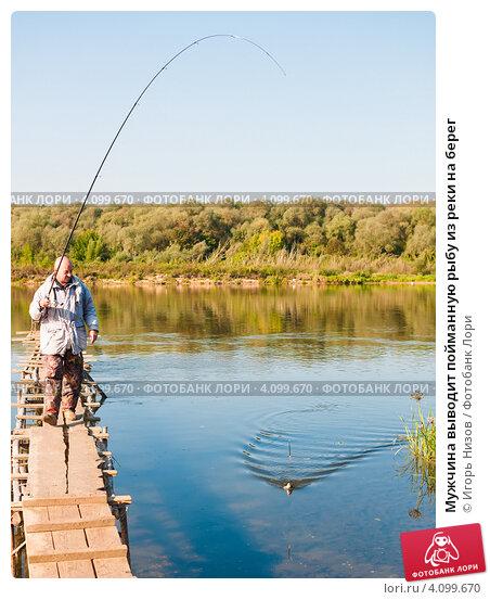 Купить «Мужчина выводит пойманную рыбу из реки на берег», эксклюзивное фото № 4099670, снято 12 сентября 2012 г. (c) Игорь Низов / Фотобанк Лори