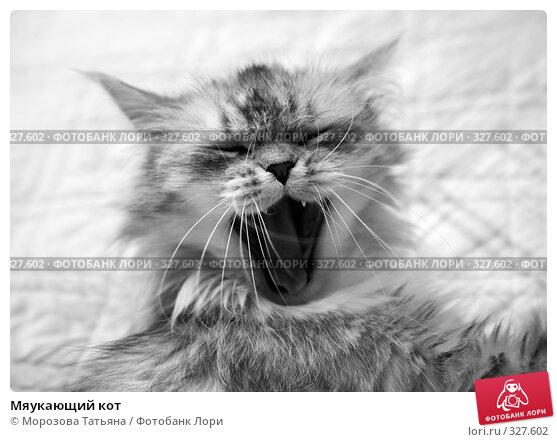 Мяукающий кот, фото № 327602, снято 17 июня 2008 г. (c) Морозова Татьяна / Фотобанк Лори