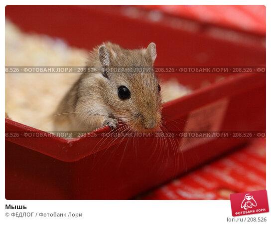 Мышь, фото № 208526, снято 22 февраля 2008 г. (c) ФЕДЛОГ.РФ / Фотобанк Лори