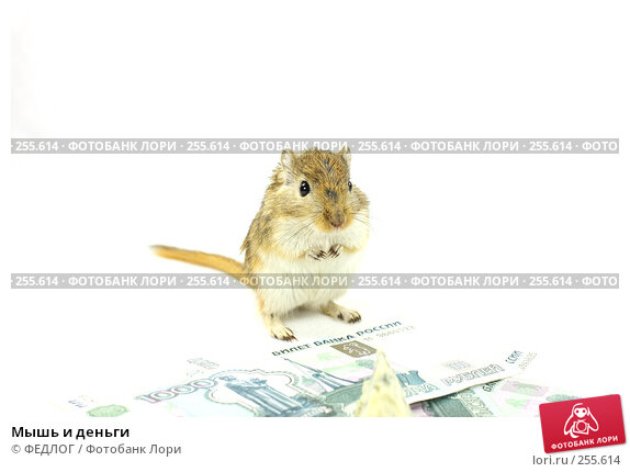 Мышь и деньги, фото № 255614, снято 18 апреля 2008 г. (c) ФЕДЛОГ.РФ / Фотобанк Лори