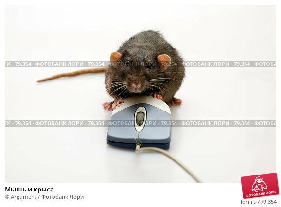 Мышь и крыса, фото № 79354, снято 2 сентября 2007 г. (c) Argument / Фотобанк Лори