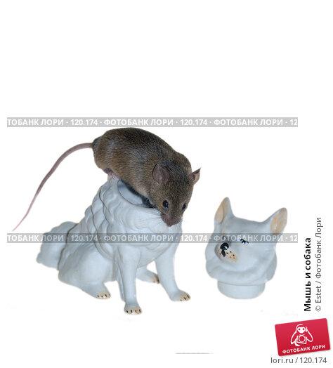 Купить «Мышь и собака», фото № 120174, снято 21 ноября 2017 г. (c) Estet / Фотобанк Лори