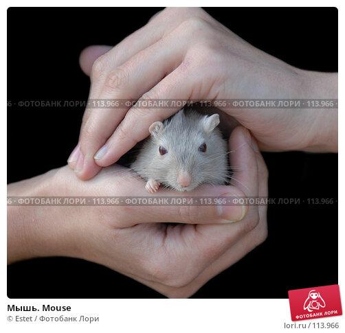 Мышь. Mouse, фото № 113966, снято 23 сентября 2007 г. (c) Estet / Фотобанк Лори
