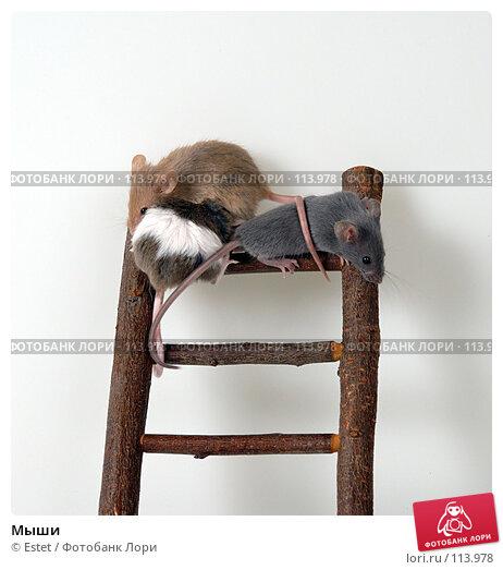 Мыши, фото № 113978, снято 24 мая 2017 г. (c) Estet / Фотобанк Лори