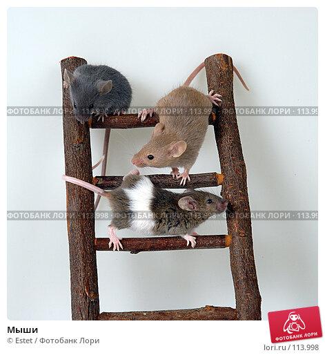 Купить «Мыши», фото № 113998, снято 23 января 2019 г. (c) Estet / Фотобанк Лори