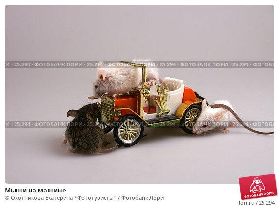 Мыши на машине, эксклюзивное фото № 25294, снято 18 марта 2007 г. (c) Охотникова Екатерина *Фототуристы* / Фотобанк Лори