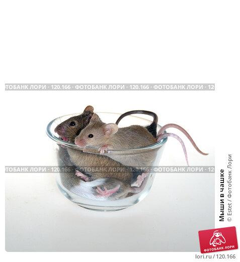 Мыши в чашке, фото № 120166, снято 30 мая 2017 г. (c) Estet / Фотобанк Лори