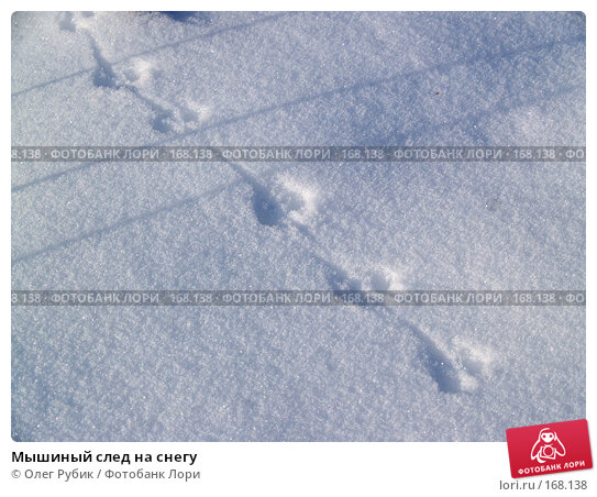 Мышиный след на снегу, фото № 168138, снято 5 января 2008 г. (c) Олег Рубик / Фотобанк Лори
