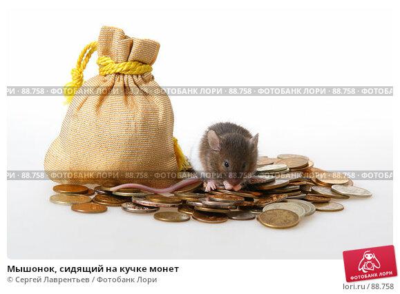 Мышонок, сидящий на кучке монет, фото № 88758, снято 23 сентября 2007 г. (c) Сергей Лаврентьев / Фотобанк Лори