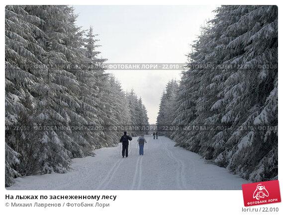 На лыжах по заснеженному лесу, фото № 22010, снято 12 февраля 2006 г. (c) Михаил Лавренов / Фотобанк Лори