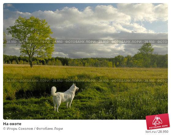 На охоте, фото № 28950, снято 19 сентября 2005 г. (c) Игорь Соколов / Фотобанк Лори