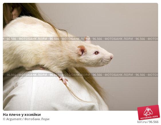 На плече у хозяйки, фото № 96566, снято 7 октября 2007 г. (c) Argument / Фотобанк Лори